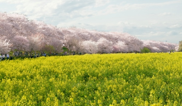 幸手桜まつり 屋台