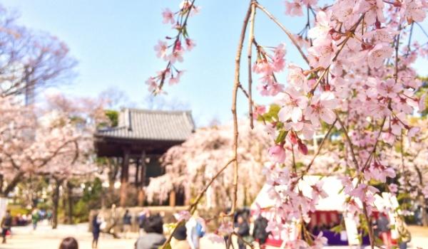 熊谷桜まつり 駐車場